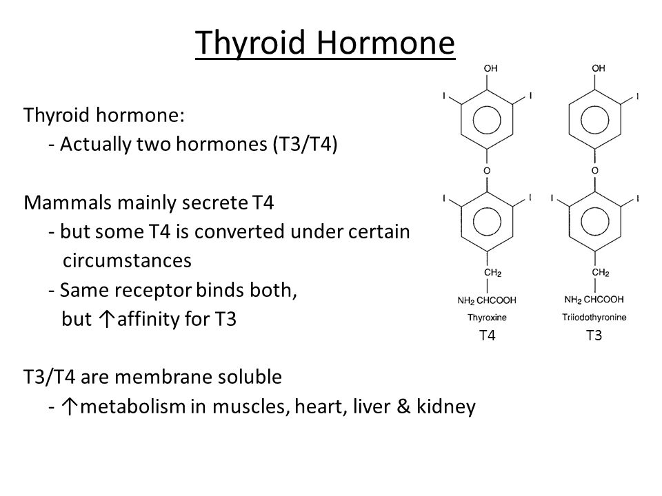 Thyroid Hormone Thyroid hormone: - Actually two hormones (T3/T4)