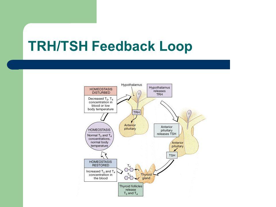 TRH/TSH Feedback Loop 4