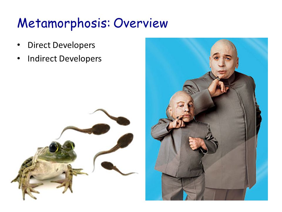 Metamorphosis: Overview