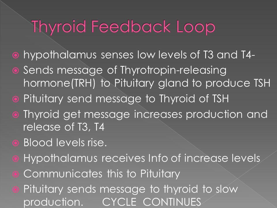 Thyroid Feedback Loop hypothalamus senses low levels of T3 and T4-