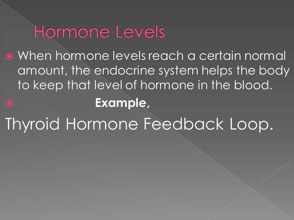Hormone Levels Thyroid Hormone Feedback Loop.