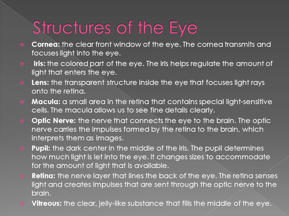 Structures of the Eye Cornea: the clear front window of the eye. The cornea transmits and focuses light into the eye.