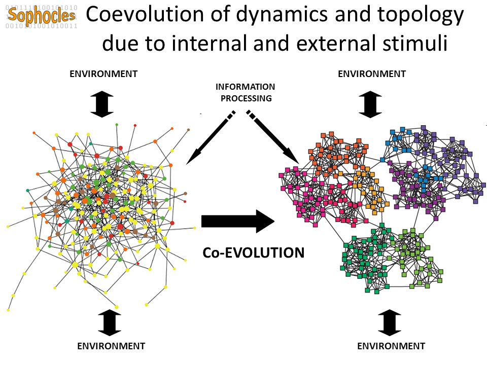 Coevolution of dynamics and topology due to internal and external stimuli