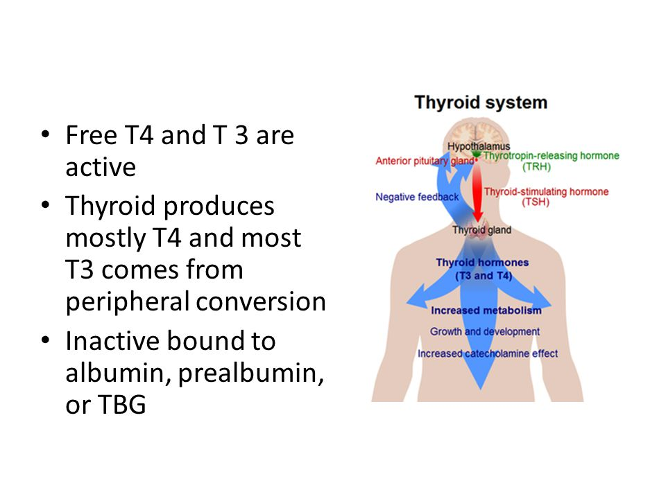 Free T4 and T 3 are active Thyroid produces mostly T4 and most T3 comes from peripheral conversion.