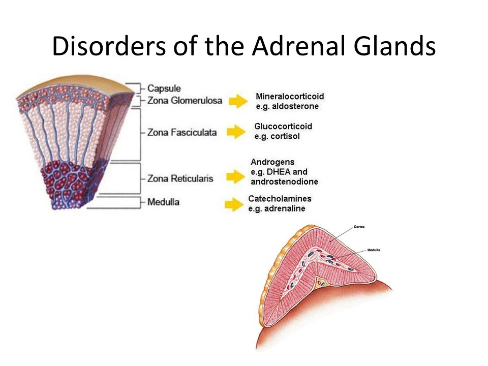Disorders of the Adrenal Glands