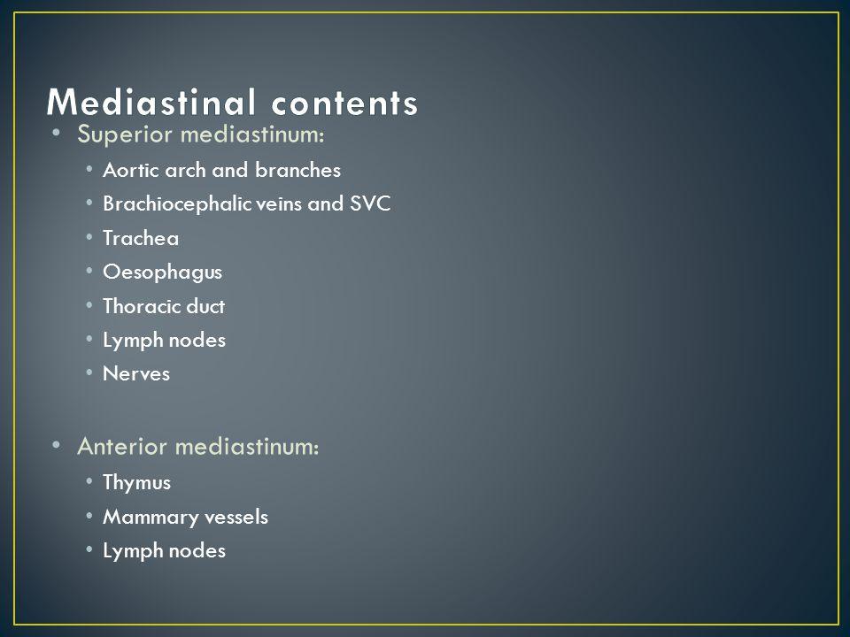 Mediastinal contents Superior mediastinum: Anterior mediastinum:
