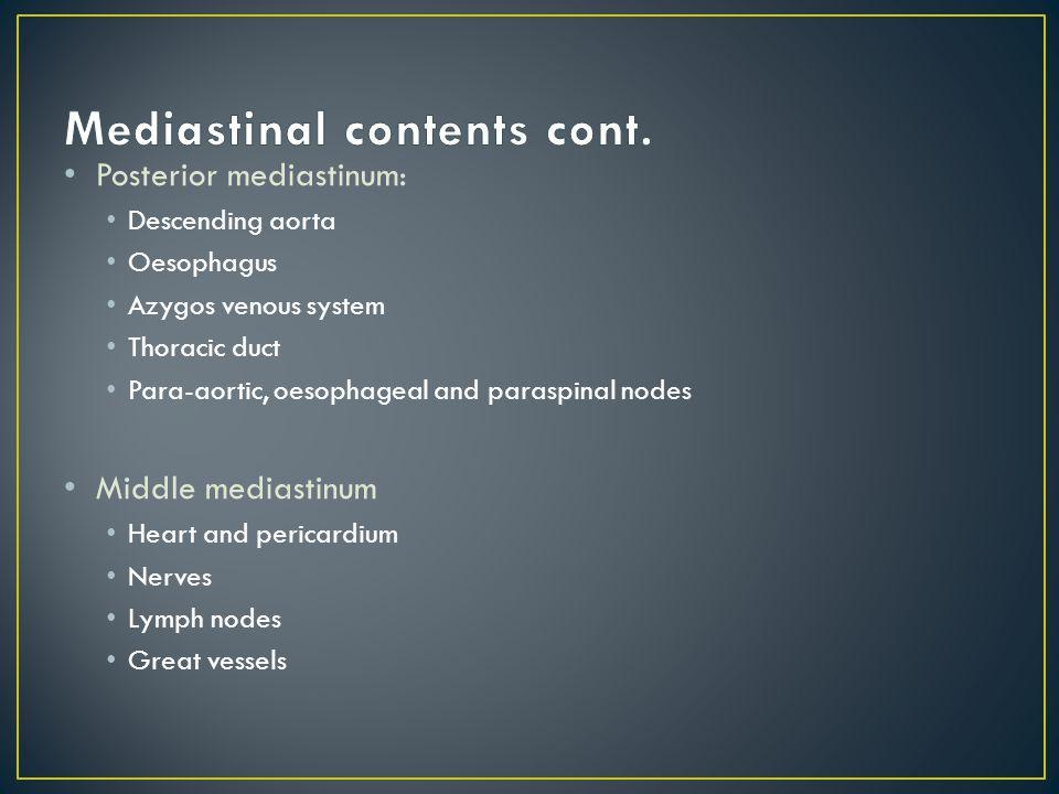 Mediastinal contents cont.
