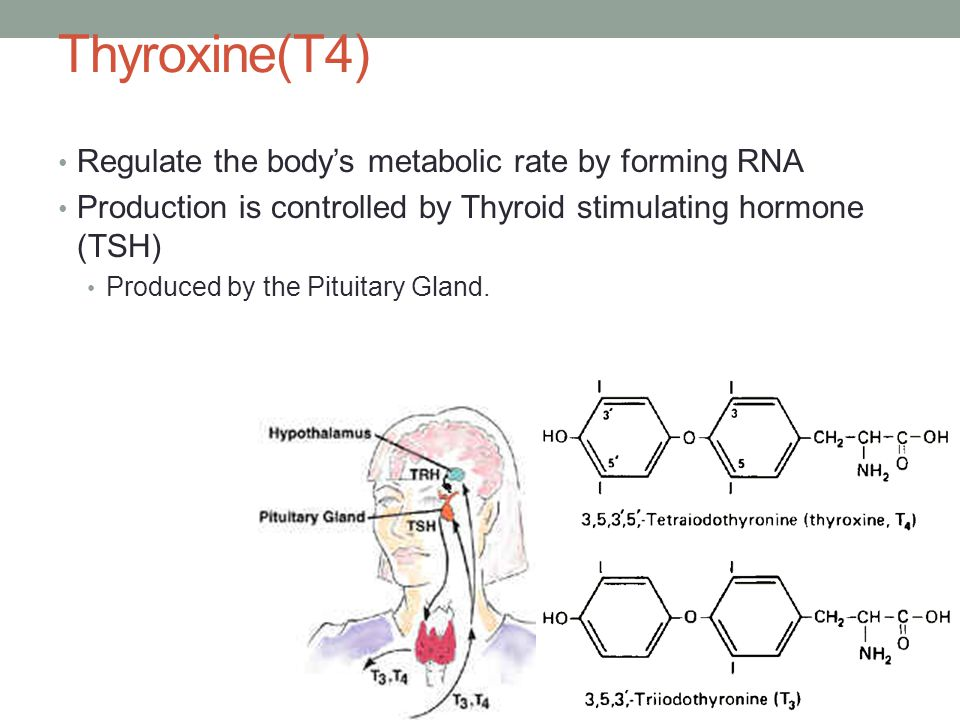 Thyroxine(T4) Regulate the body's metabolic rate by forming RNA