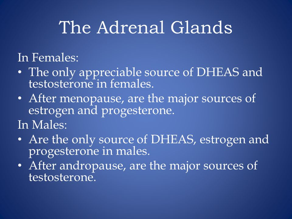 The Adrenal Glands In Females: