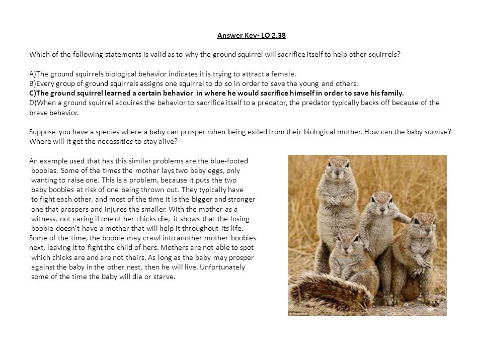 Answer Key- LO 2.38 Which of the following statements is valid as to why the ground squirrel will sacrifice itself to help other squirrels.