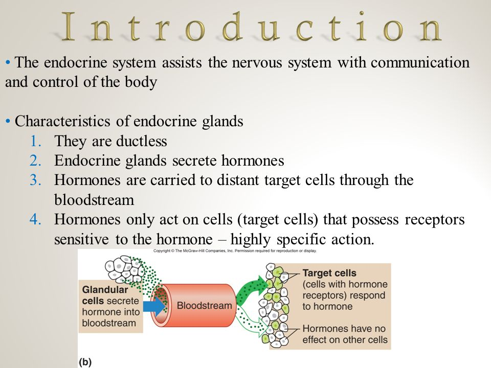 an introduction to the analysis of nervous system