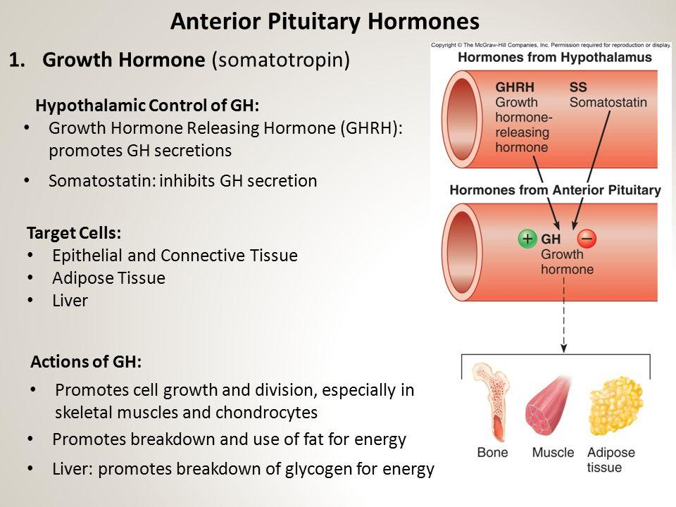 Anterior Pituitary Hormones