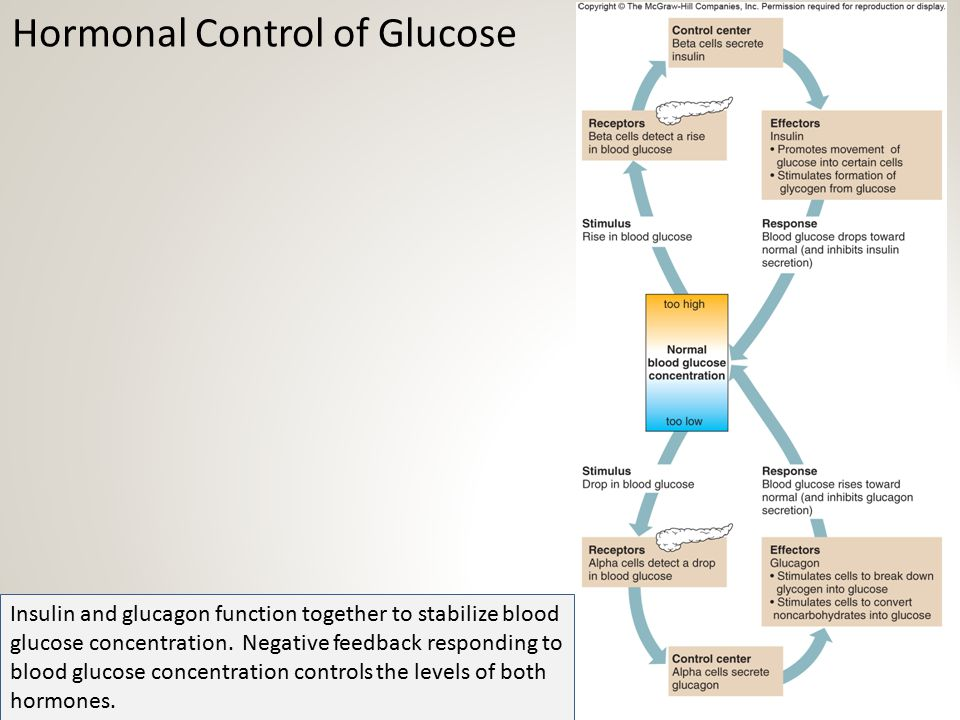 Hormonal Control of Glucose