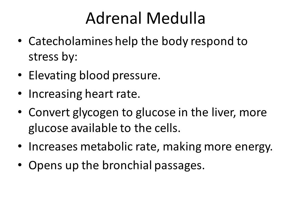 Adrenal Medulla Catecholamines help the body respond to stress by: