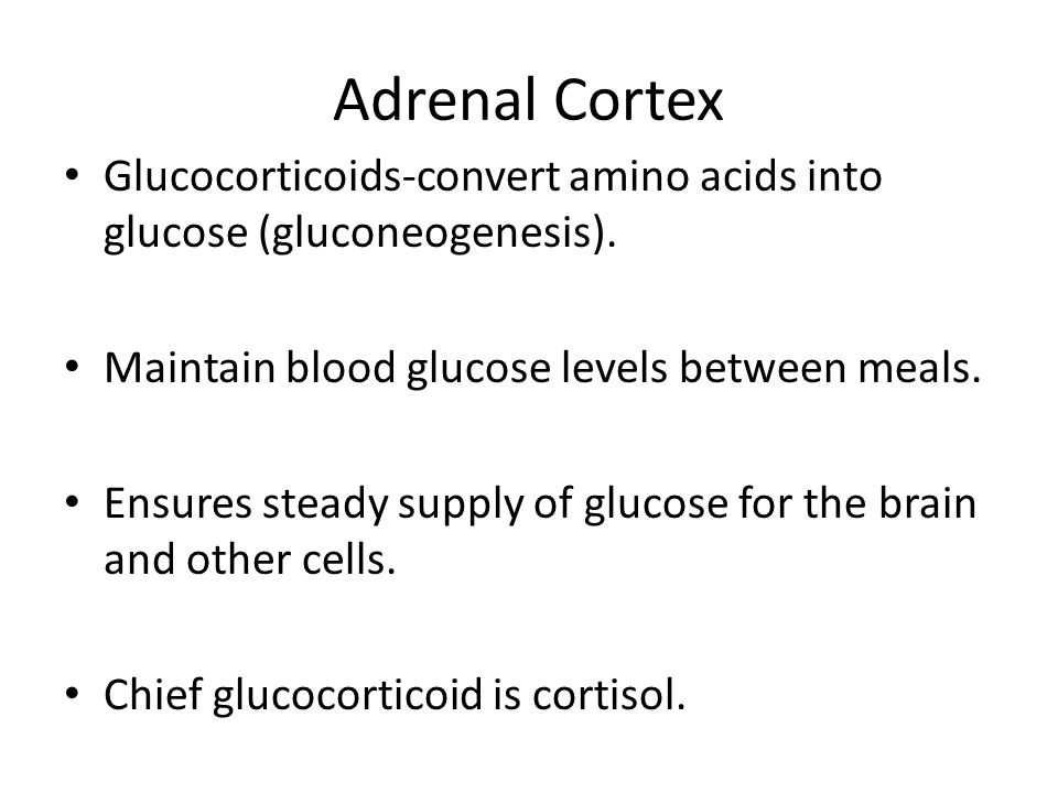 Adrenal Cortex Glucocorticoids-convert amino acids into glucose (gluconeogenesis). Maintain blood glucose levels between meals.