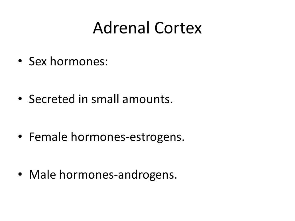 Adrenal Cortex Sex hormones: Secreted in small amounts.