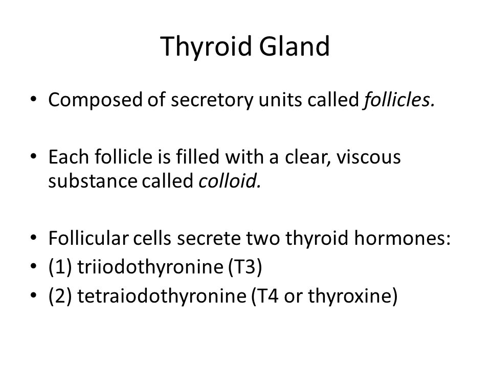 Thyroid Gland Composed of secretory units called follicles.