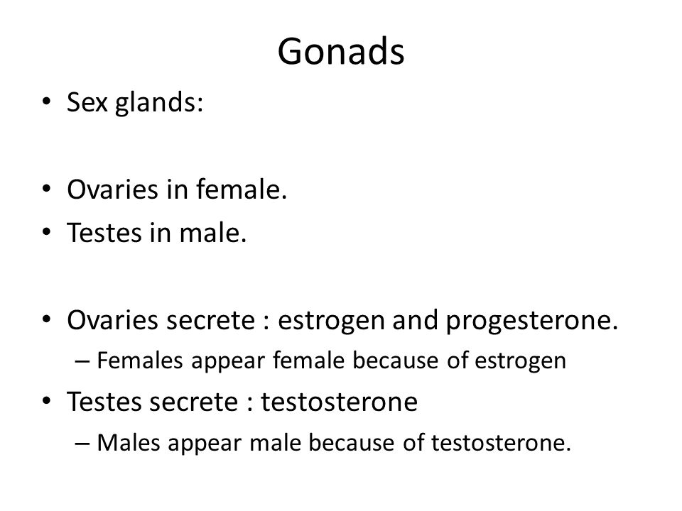Gonads Sex glands: Ovaries in female. Testes in male.
