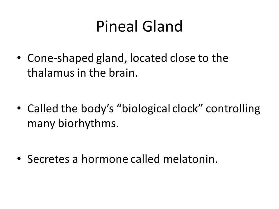 Pineal Gland Cone-shaped gland, located close to the thalamus in the brain. Called the body's biological clock controlling many biorhythms.