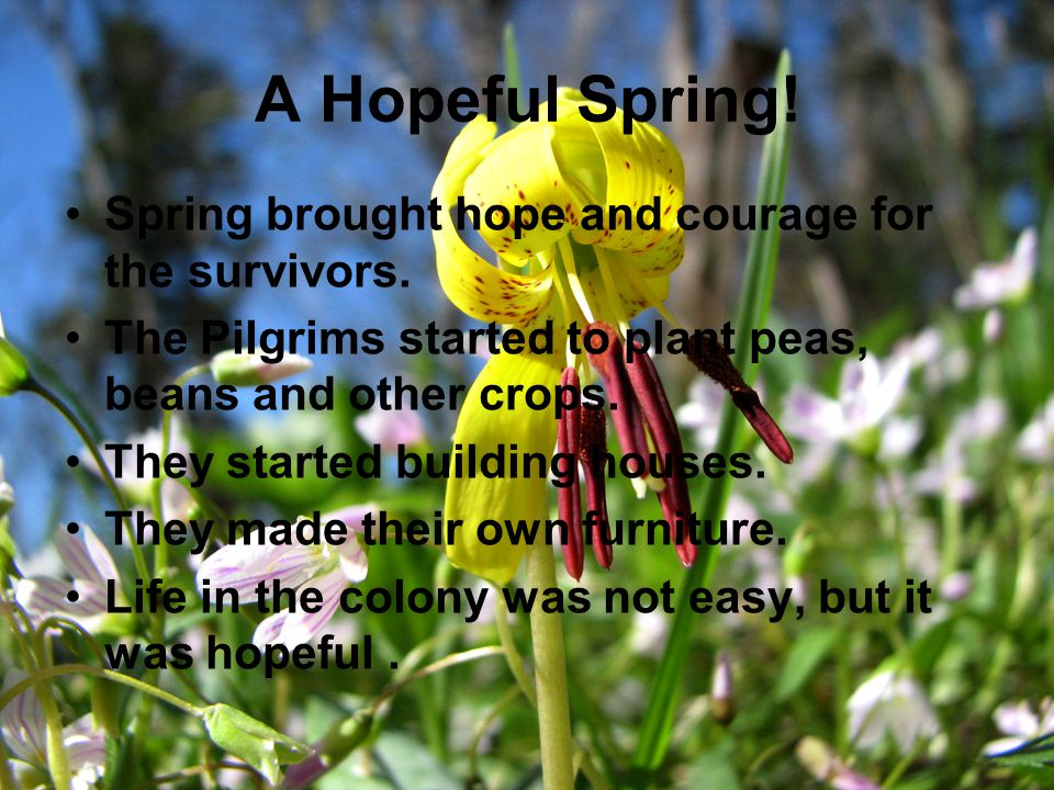 A Hopeful Spring! Spring brought hope and courage for the survivors.