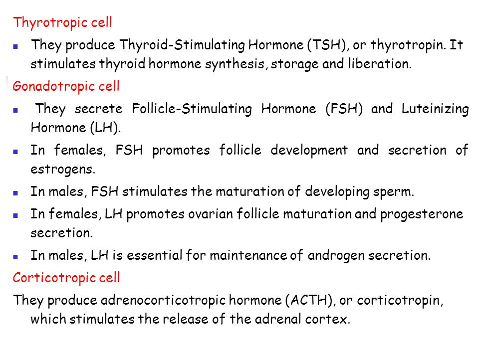 Thyrotropic cell They produce Thyroid-Stimulating Hormone (TSH), or thyrotropin. It stimulates thyroid hormone synthesis, storage and liberation.