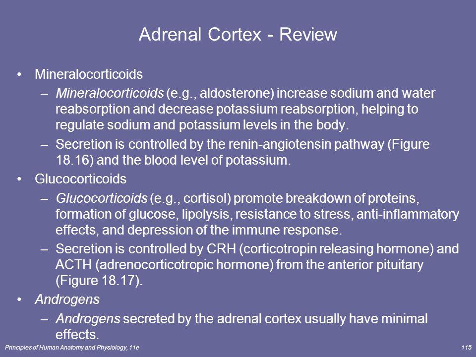 Adrenal Cortex - Review