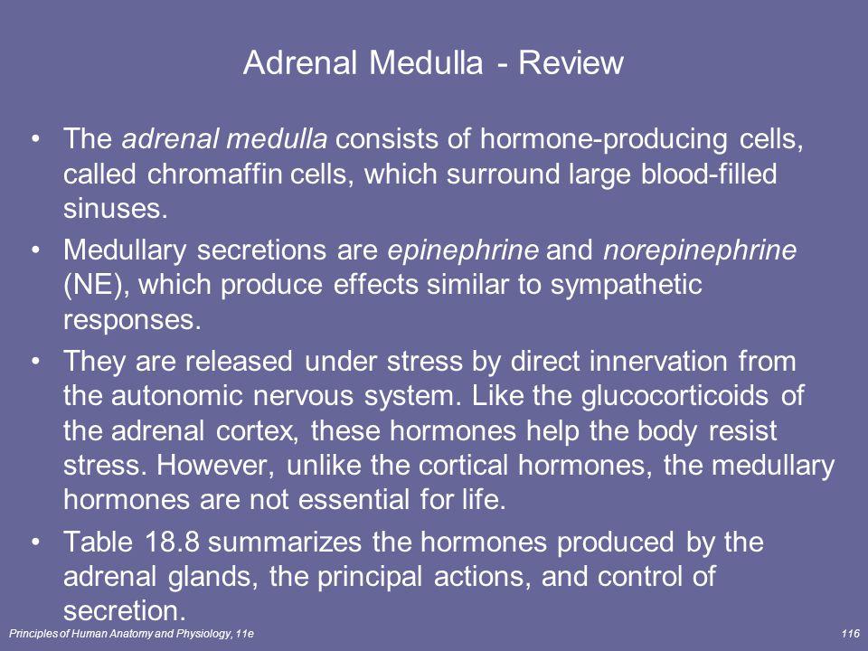 Adrenal Medulla - Review