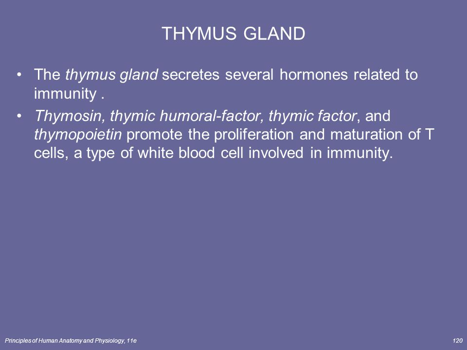 THYMUS GLAND The thymus gland secretes several hormones related to immunity .