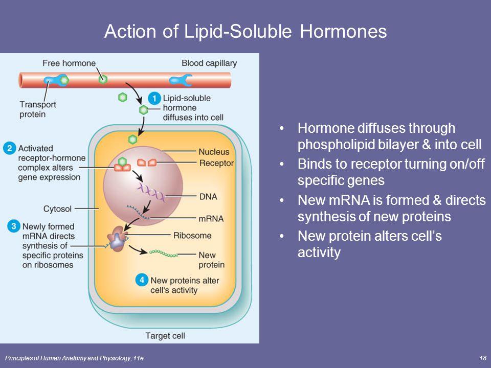 Action of Lipid-Soluble Hormones
