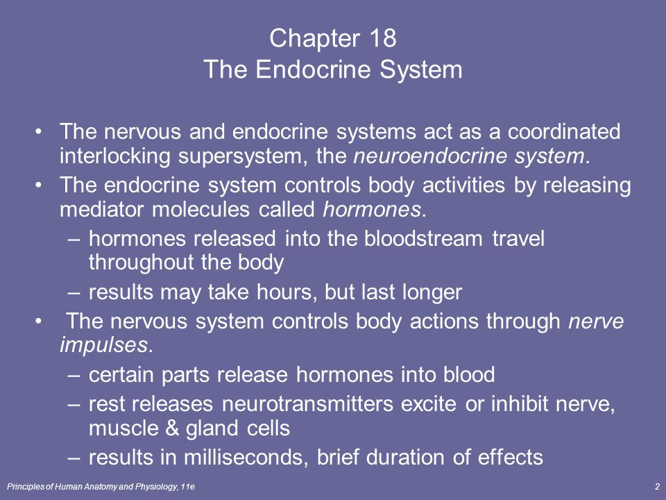 Chapter 18 The Endocrine System