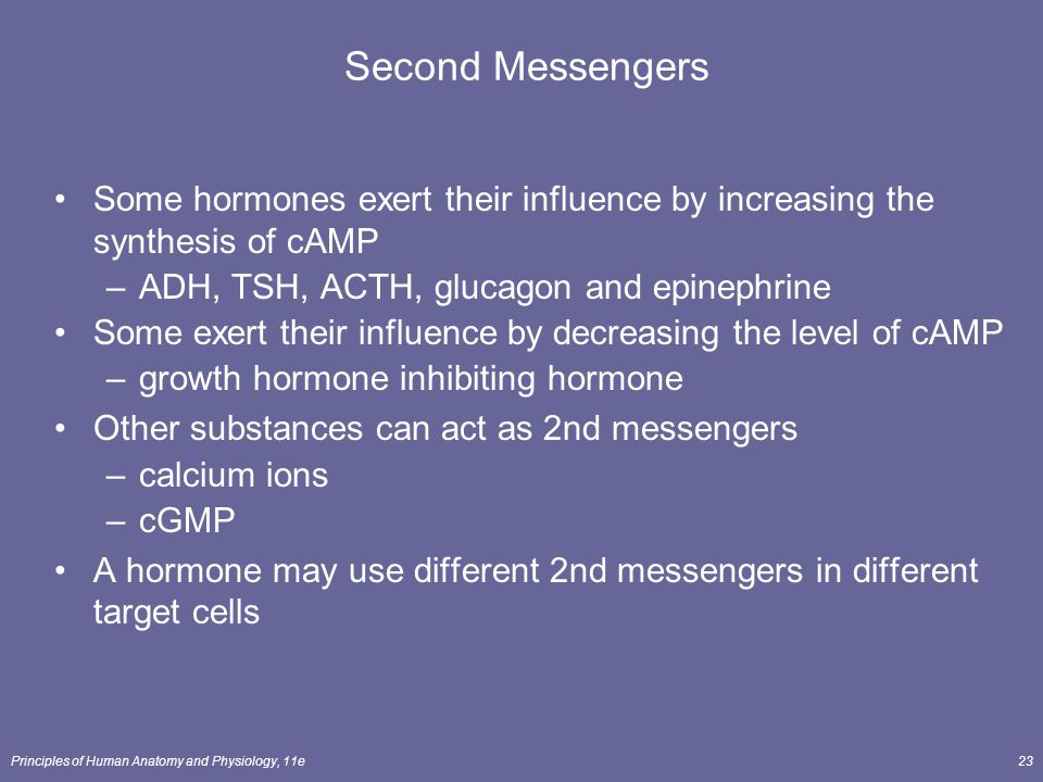 Second Messengers Some hormones exert their influence by increasing the synthesis of cAMP. ADH, TSH, ACTH, glucagon and epinephrine.