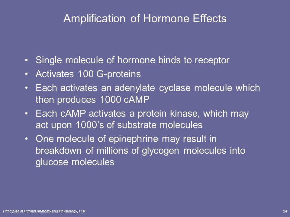 Amplification of Hormone Effects