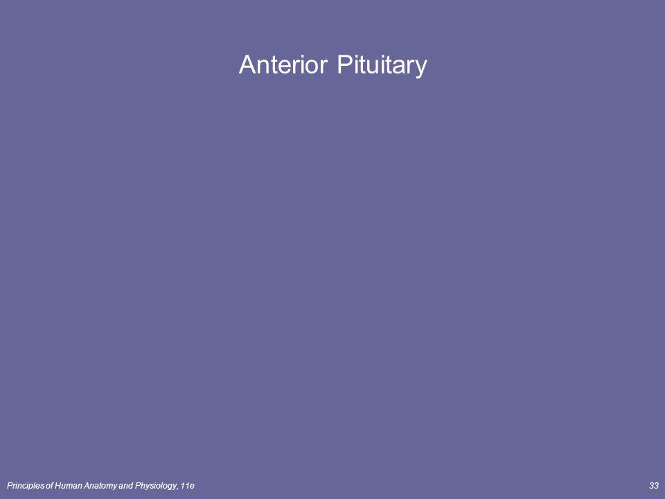 Anterior Pituitary Principles of Human Anatomy and Physiology, 11e