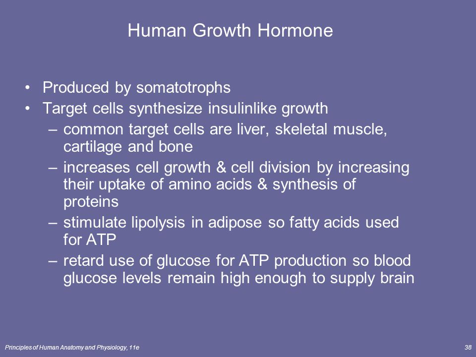 Human Growth Hormone Produced by somatotrophs
