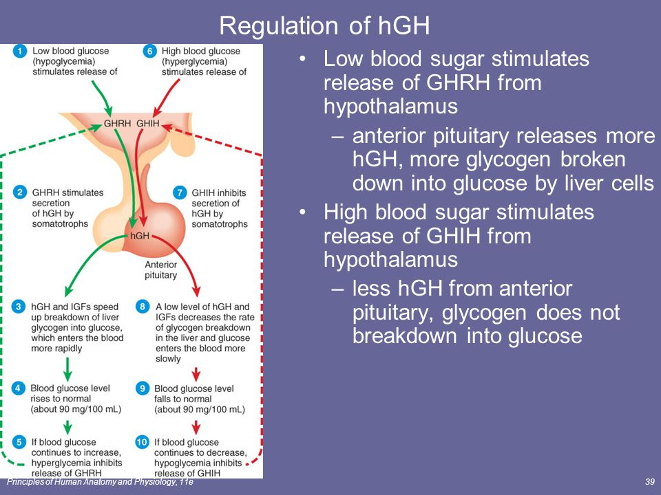 Regulation of hGH Low blood sugar stimulates release of GHRH from hypothalamus.