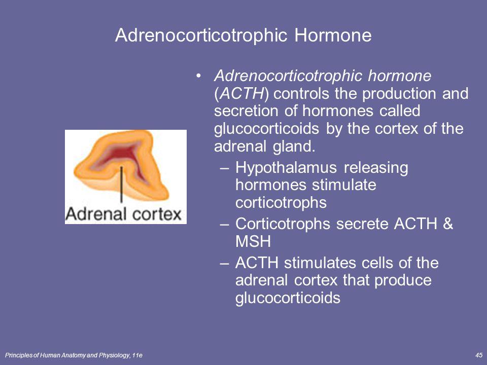 Adrenocorticotrophic Hormone