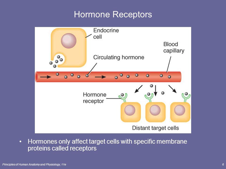 Hormone Receptors Hormones only affect target cells with specific membrane proteins called receptors.