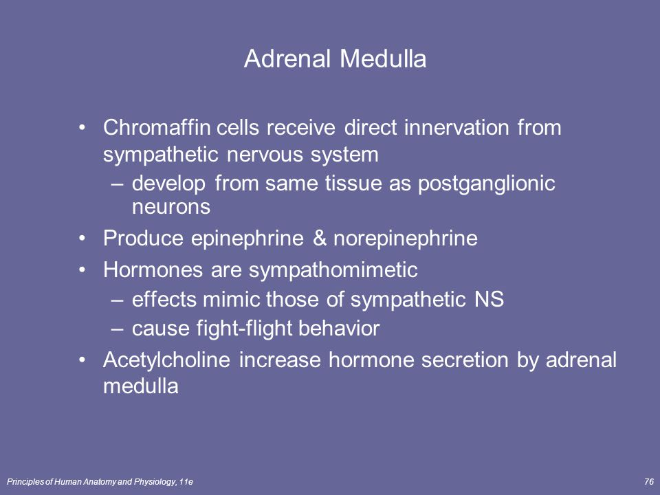 Adrenal Medulla Chromaffin cells receive direct innervation from sympathetic nervous system. develop from same tissue as postganglionic neurons.
