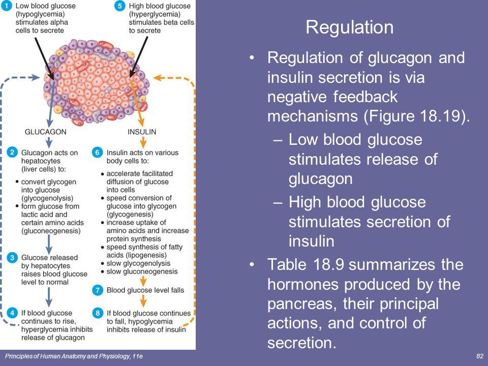 Regulation Regulation of glucagon and insulin secretion is via negative feedback mechanisms (Figure 18.19).