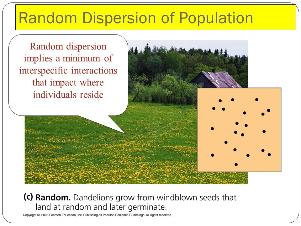 Random Dispersion of Population
