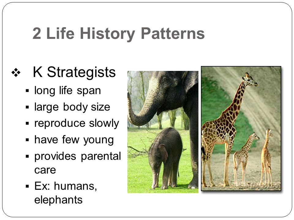 2 Life History Patterns K Strategists long life span large body size