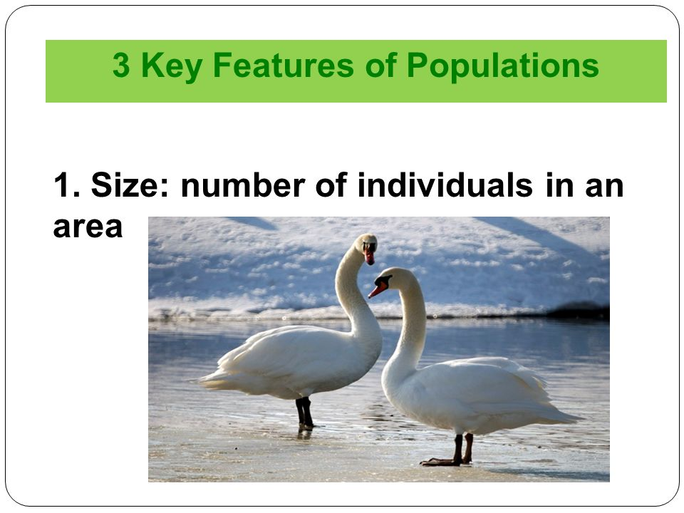 3 Key Features of Populations