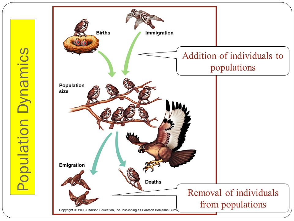 Population Dynamics Addition of individuals to populations