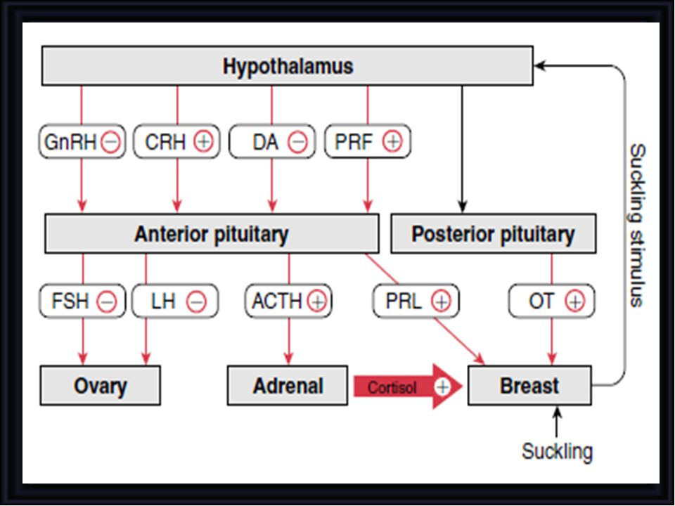 PRL levels, which are elevated by the end of gestation,