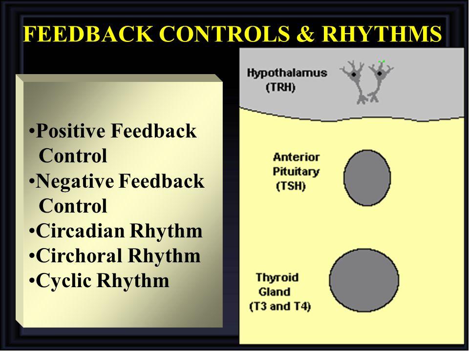 FEEDBACK CONTROLS & RHYTHMS