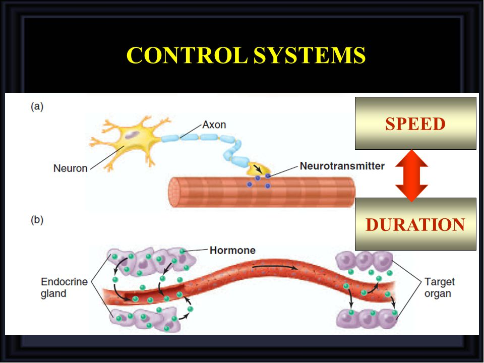 CONTROL SYSTEMS SPEED DURATION