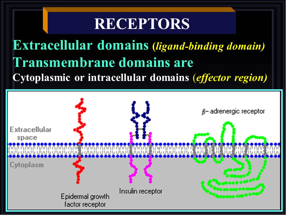 RECEPTORS Extracellular domains (ligand-binding domain) Transmembrane domains are Cytoplasmic or intracellular domains (effector region)