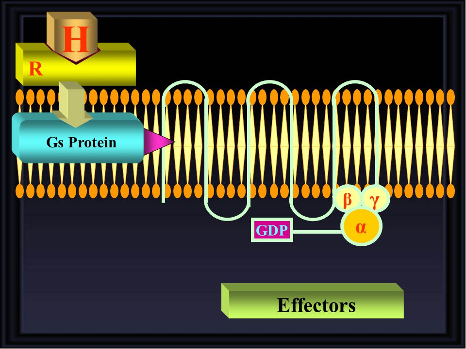 H R Gs Protein γ β α GDP Effectors