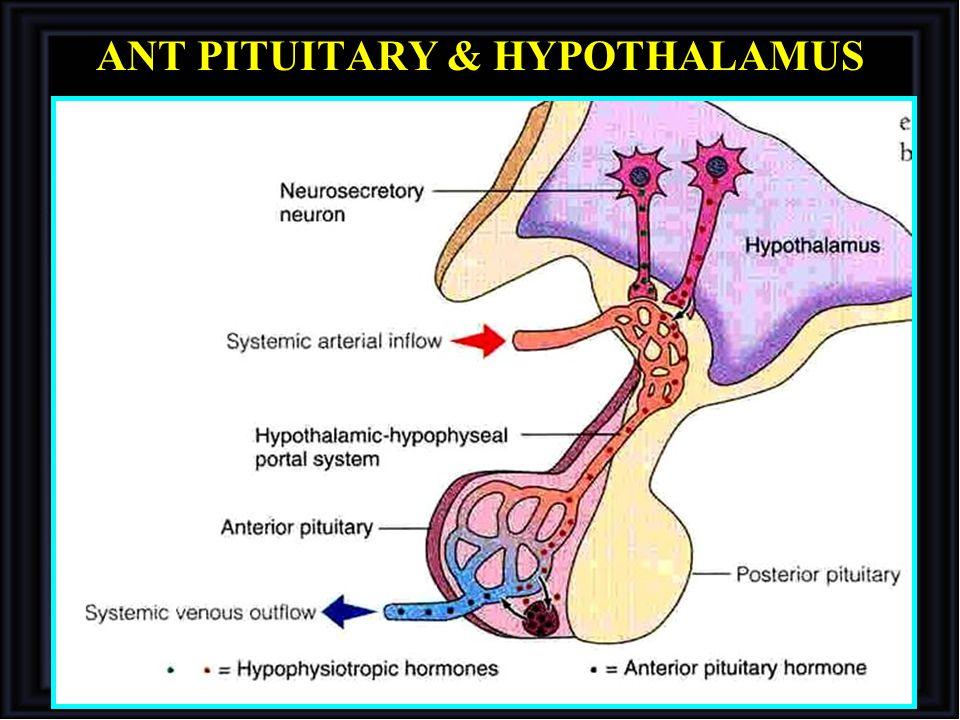 ANT PITUITARY & HYPOTHALAMUS