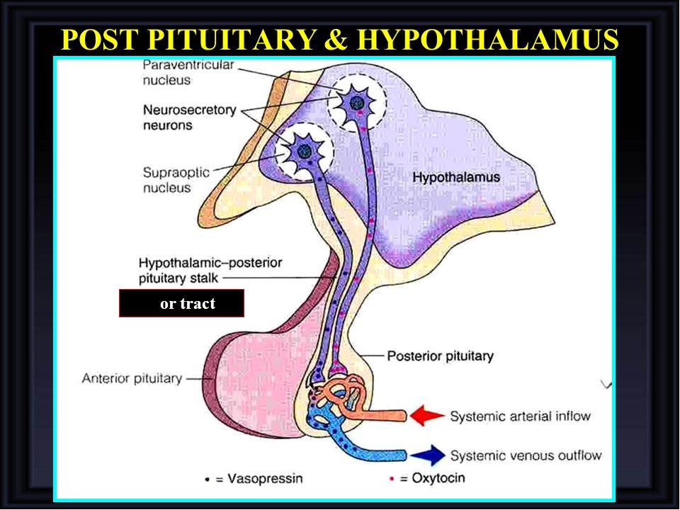 POST PITUITARY & HYPOTHALAMUS